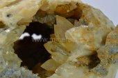 Minerál KALCIT pseudomorfóza po mušli