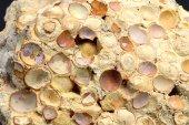 Minerál ARAGONIT-HRACHOVEC