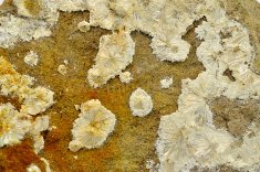 Minerál ALUMOHYDROKALCIT